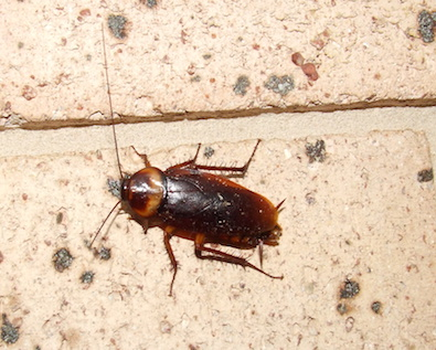 O Shea S Pest Management Solving Your Pest Problems In