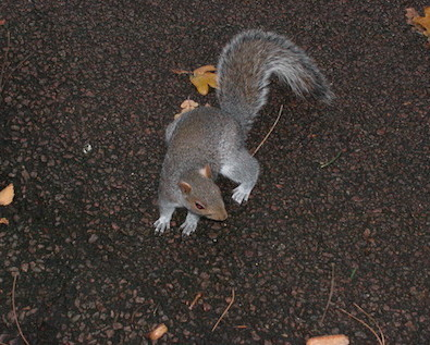 Image of a squirrell